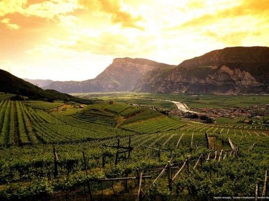 xVineyard-in-Trentino-760x570.jpg.pagespeed.ic.qJiuQUYXkL