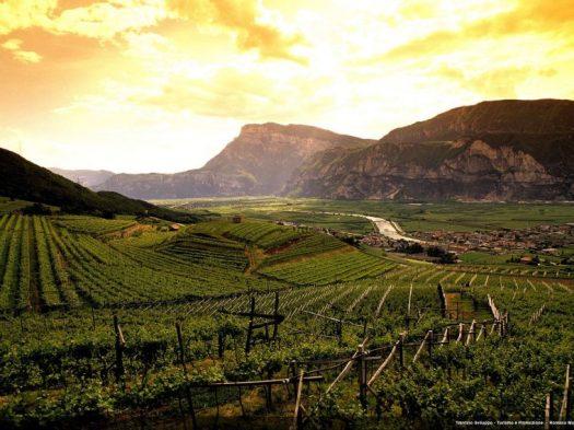 xVineyard-in-Trentino-760x570.jpg.pagespeed.ic.qJiuQUYXkL
