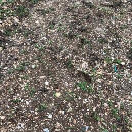 ang soil