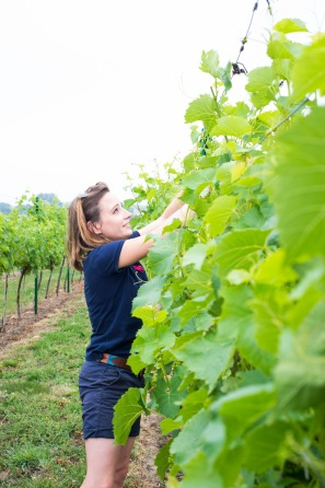 Poulton Hill Estate Vineyard feature. Pictured tiléri charles-jones. 21/07/17 Thomas Kelsey